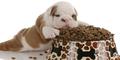 £4.00 off Purina BETA Puppy Food