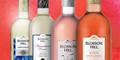 50p off Blossom Hill Wine