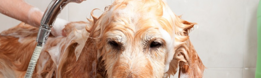 Luxury Shampoo & Conditioner For Dogs