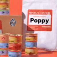 Massive Cat Food Box – Only £2.50!