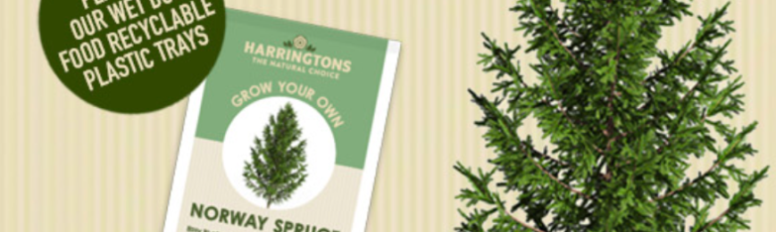Free Norway Spruce Tree Seeds
